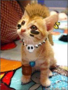 Punk kitteh #pets #cats bit.ly/HPgcue