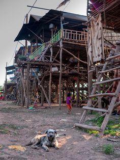 Tonle Sap - Durante a Estação Seca Angkor, Tonle Sap, House Styles, Rainy Season, Species Of Birds, Cambodia