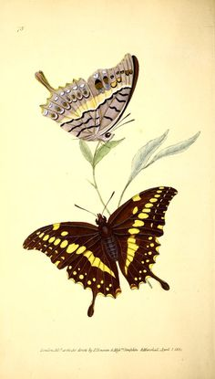 v.3 (1825) - The Naturalist's repository, or, Monthly miscellany of exotic natural history / - Biodiversity Heritage Library
