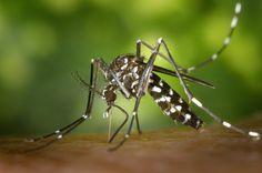 La mejor muestra de Trampas caseras para los insectos más molestos