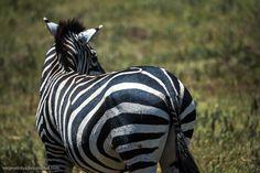 Ngorongoro is the best Safari in Africa 18