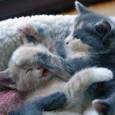 Mamaaaaa... mi hermanito me está molestando ;-) Disfruta del día www.petclic.es