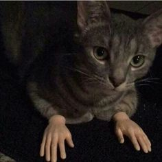 I WATCHED A SHORT HORROR FILM WITH A CAT WITH HANDS
