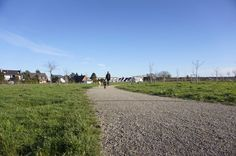 Dogwalking am Buschend / Landschaftspark nahe dem Wertstoffhof in Meerbusch Strümp - Spaziergang