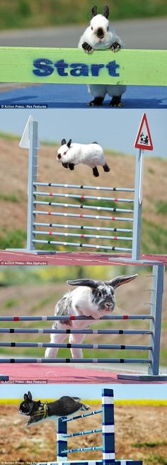 High Jump Rabbits