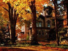 """crisp-season: """"Autumn Leaves~Haunted Trees """""""