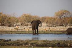 Uk Trip, Wildlife Photography, Safari, National Parks, September, Elephant, Travel, Animals, Instagram