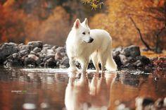 superbnature:  White Beauty by anne_geier http://ift.tt/13Skjpp