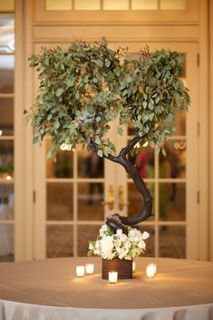 Escort card table featured a manzanita tree nestled in white florals with seeded eucalyptus. Manzanita Tree Centerpieces, Tree Wedding Centerpieces, Wedding Arrangements, Floral Arrangements, Tall Centerpiece, Wedding Favors, Eucalyptus Tree, Seeded Eucalyptus, Palm Wedding
