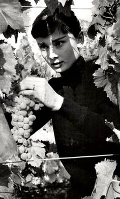 Audrey Hepburn picking grapes on her Italian farm in 1955.