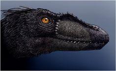 Archaic - Black Raptor by ~orbyss on deviantART Jurassic World, Jurassic Park, Dinosaur Fossils, Dinosaur Art, Reptiles, Mammals, Chuck Norris, Raptor Dinosaur, Dinosaurs