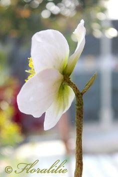 Christrose aus Zucker von Floralilie