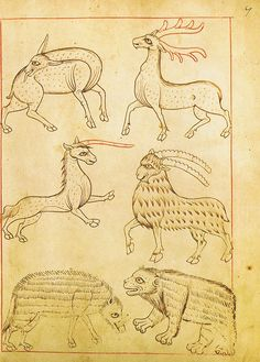 Reiner Musterbuch - unicorn by petrus.agricola, via Flickr