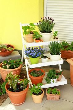 Maybe you don't have a lot of backyard space, or any at all. If you live in an apartment building, however, you might have plenty of balcony or rooftop space with which to plant a garden anyway. There are thousands of container gardens to choose from, so the style is entirely up to you. Whatever you can fit comfortably up there, have at it! There's really no wrong way to plant your own rooftop garden.