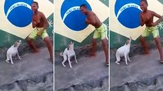Dancing dog shakes his hips to clapping in adorable video