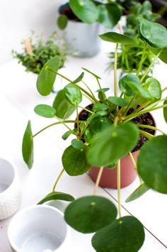 anthurie garten pinterest pflege pflanzen und zimmerpflanzen. Black Bedroom Furniture Sets. Home Design Ideas