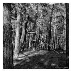 Analog Street / Nature walk 00002 Fallen