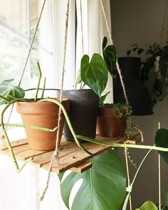 Learn how to make your own floating plant shelf - Plants - Houseplants - Indoor Plants - eclectic - boho - decor