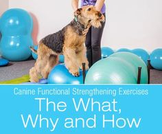 Canine Functional Strengthening Exercises: The What, Why and How