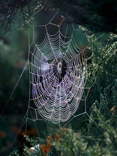 He put into the lowly spider the ability to spin webs of fantastical design!