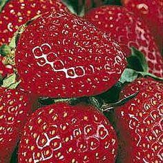 Strawberry, Ozark Beauty, zones 4-8