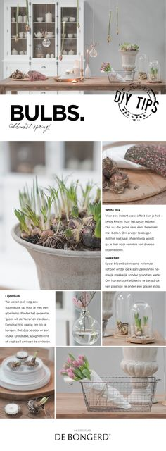 www.debongerd.nl Of ze nu bloeien of niet, bloembollen zijn altijd dankbaar stylingmateriaal. Dat een bloembol niet persé in een pot hoeft, laten we je met onze inspirerende stylingtips zien! Wij wensen je alvast een fijn voorjaar! Stylingtip: http://www.debongerd.nl/style/week-7-bulbs/S70