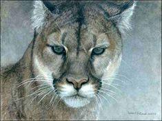 christcenteredmall.com/stores/art/bateman/zooms/intent-cougar-zoom.jpg