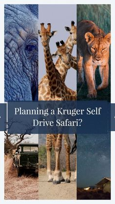Planning our first Kruger self drive safari, it was hard to find practical information on what we would need to take and how to prepare. This is that guide! Travel Articles, Travel Photos, Kruger National Park, Self Driving, Ultimate Travel, Beautiful Places To Visit, Africa Travel, Trip Planning, Camps