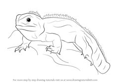 how to draw a bearded dragon bearded dragon lizard tattoos pinterest bearded dragon. Black Bedroom Furniture Sets. Home Design Ideas