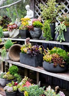 April showers have come early this year and have left our Culver City  location ripe with flowers and greenery of all colors, shapes and sizes!  Our eight greenhouses are now brimming with exterior plants, cacti,  succulents, and exotic plants that are ready to find a home.  We also carry a wid