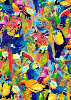 YARD BIRDS - Primavera Verão 2015