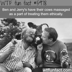 Ben and Jerry's cows - WTF fun facts