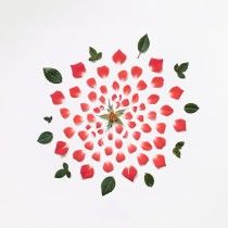 Exploded Flowers Series By Qi Wei Inspired By Todd Mclellans Dissassembly Series