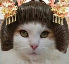Geisha cat omg xD