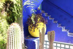 Majorelle garden in Marrakech Marrakech, Blue Yellow, Morocco, Colors, Garden, Garten, Lawn And Garden, Colour, Gardens