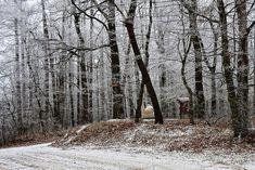 https://flic.kr/p/PS19dC | Frosty forest / Zúzmarás erdő | cold erdő forest fák hideg kalten raureif rime trees tél waldbäume winter zúzmara