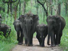 Nugu Wildlife Sanctuary - in Karnataka, India