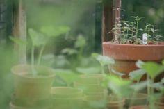eva nemeth - greenhouse