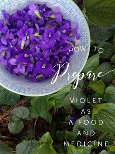Violet as Food + Wild Medicine // Blog Castanea   #violet #violets #herbalmedicine #foraging #wildfood #herbalism #herbalist #herbalife