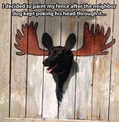 Painted fence for dog