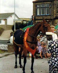 Red Rum Race Horses, Horse Racing, Rum, Sport Of Kings, Horse Breeds, Thoroughbred, Beautiful Horses, History, Ireland