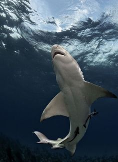 Amazing Shark Photography ( 20+ Photos ) Post.1