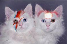 💘💘 Forever a Bowie kid xoxo Freddie Mercury, David Bowie Ziggy, Bowie Ziggy Stardust, Moonage Daydream, Petra Collins, Leopard Cat, Animals Of The World, Cat Art, My Idol