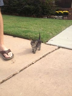 Found this little guy following me down the street