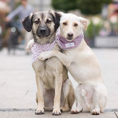 😍 Sammy and Yuna together, in their @lucyand.co bandanas. Photo by @fairytrails