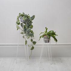 #PlantStand 🌵🌴💚🍃🌿🌱 || geo-fleur.com #geofleur ||