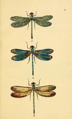 vintage dragonfly art print