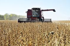 Soybeans produce record yields, but less income