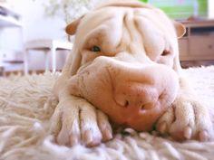 Oshi já faz parte da comunidade AMA. Vem descobrir a melhor rede social para animais e encontra o par perfeito para o teu animal de estimação. Junta-te à nossa comunidade e faz-te amigo de Oshi