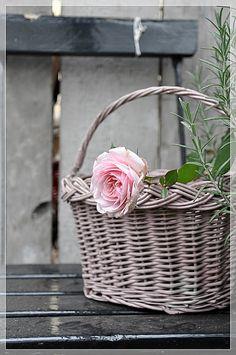 rose in a basket